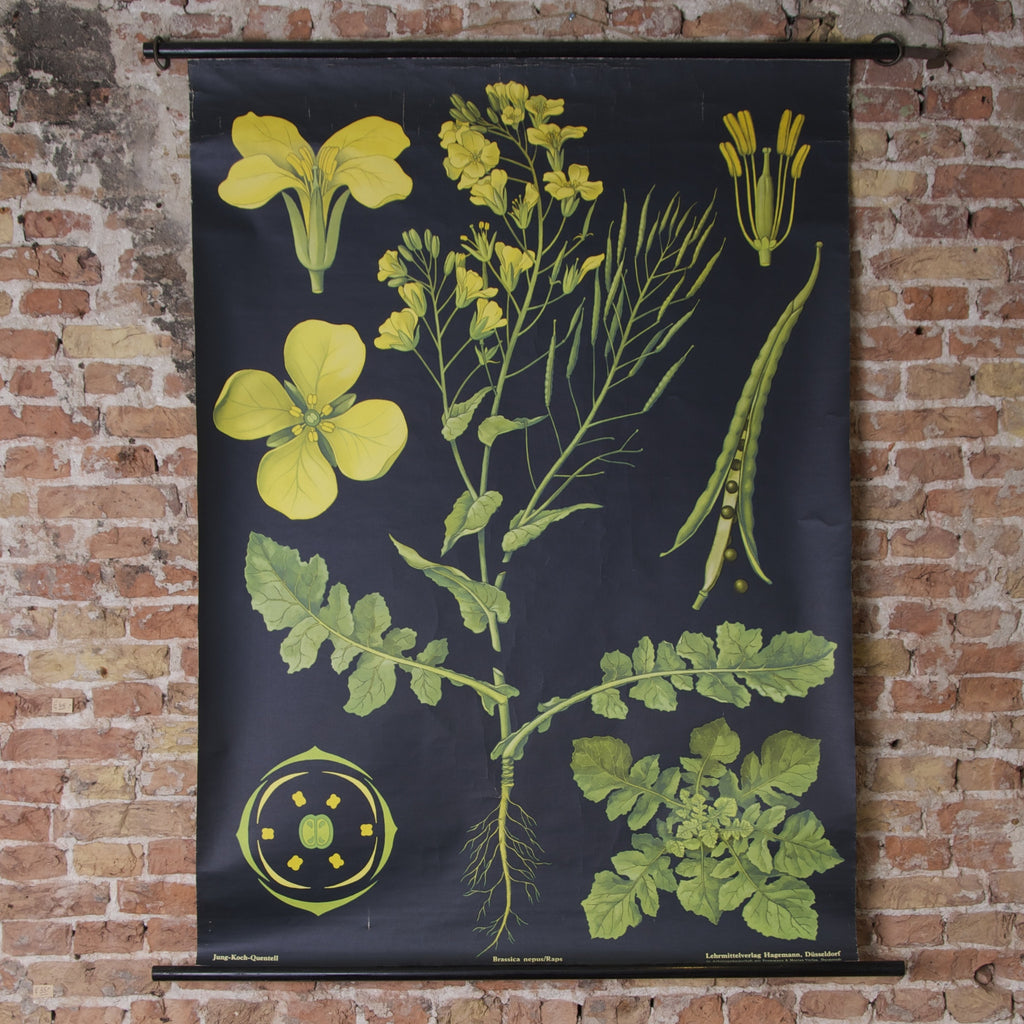 Rapeseed School Chart Concrete Matter Vintage Amsterdam
