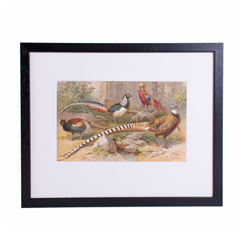 Pheasants Lithograph