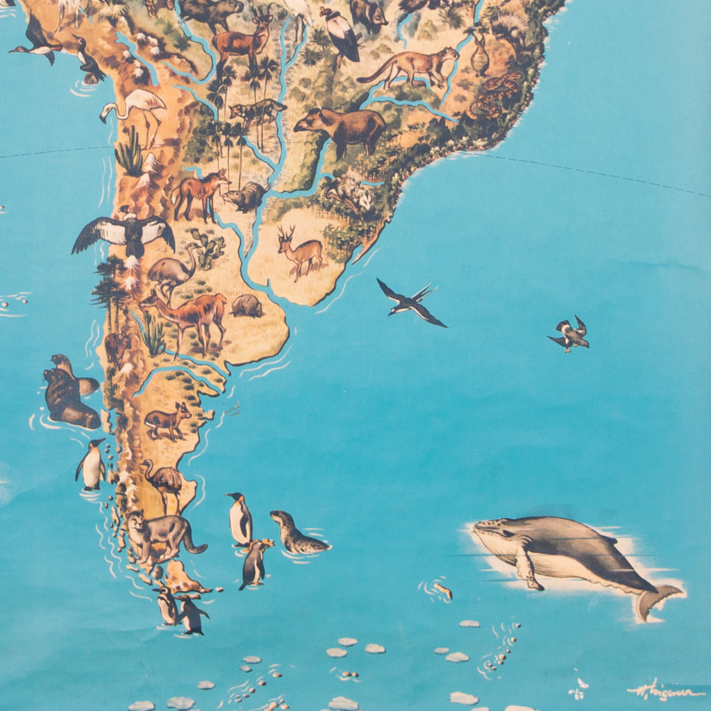 South America Animals School Chart Concrete Matter Amsterdam Vintage