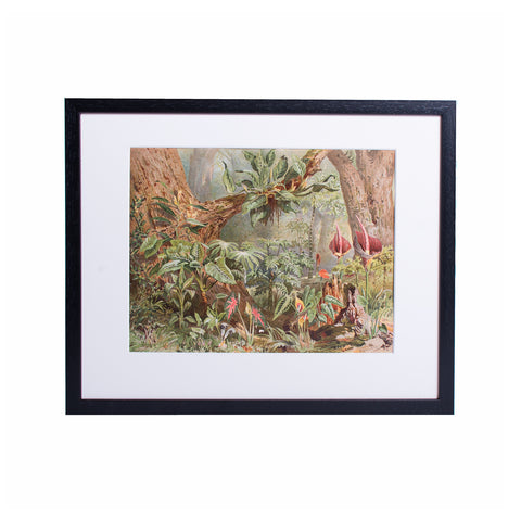 Tropical Plants Lithograph