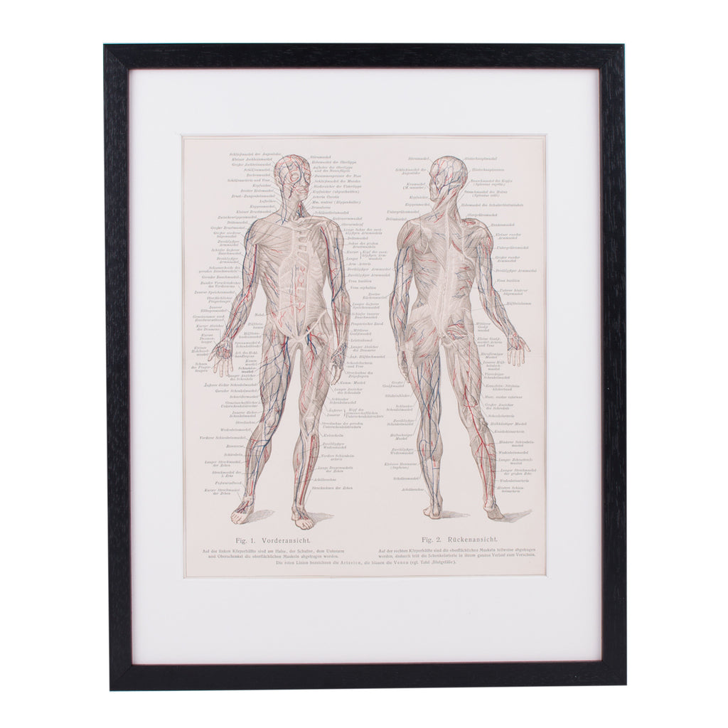 Human Muscles Lithograph Lito Litho Concrete Matter Amsterdam Vintage