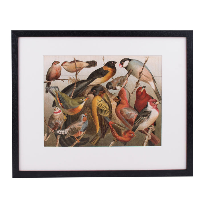 Exotic Cage Birds Lithograph Lito Litho Concrete Matter Amsterdam Vintage