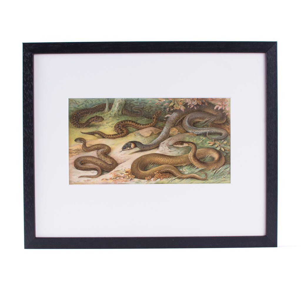 Snakes Lithograph Lito Litho Concrete Matter Amsterdam Vintage