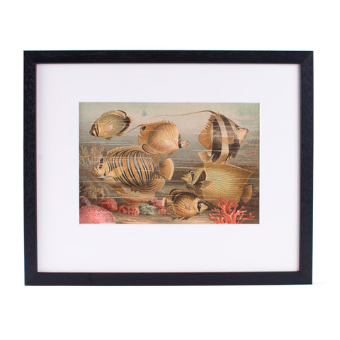 Tropical Fishes Lithograph