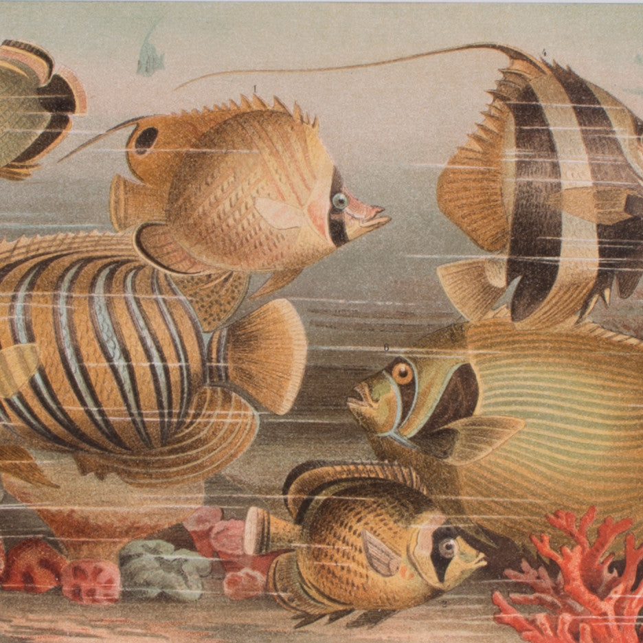 Tropical Fishes Lithograph Lito Litho Concrete Matter Amsterdam Vintage