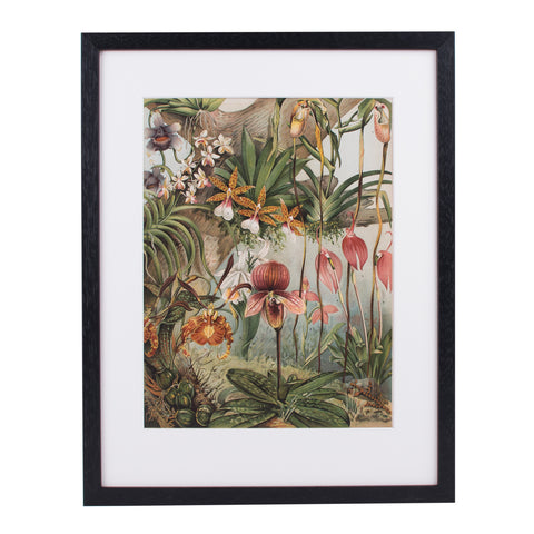 Orchids Lithograph