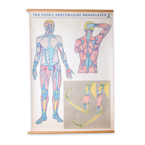 Dutch Anatomy School Chart 2