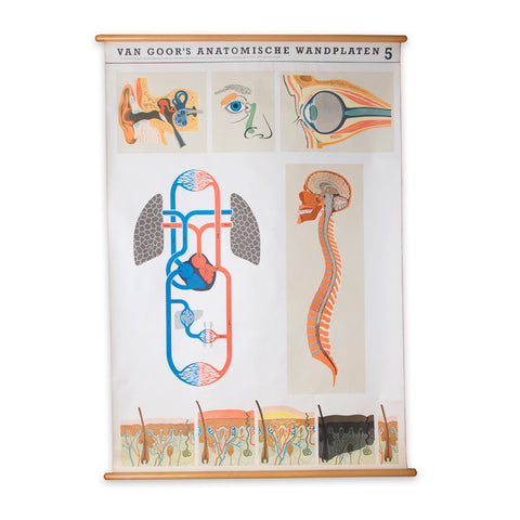 Dutch Anatomy School Chart Chart 5