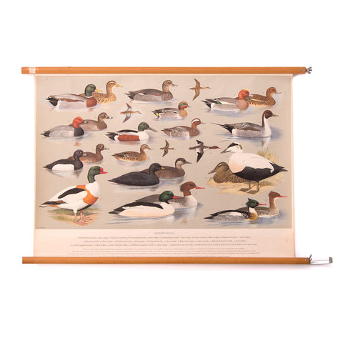 Water Birds School Chart