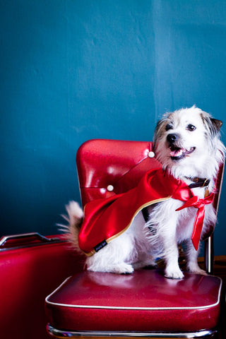 Americana Dog Cape- Red & Blue - Amazing Capes - 1