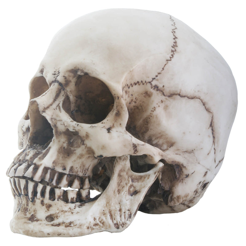 Floral Carved Human Skull Home Decoration