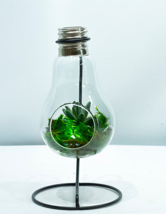 Illuminated Terrarium