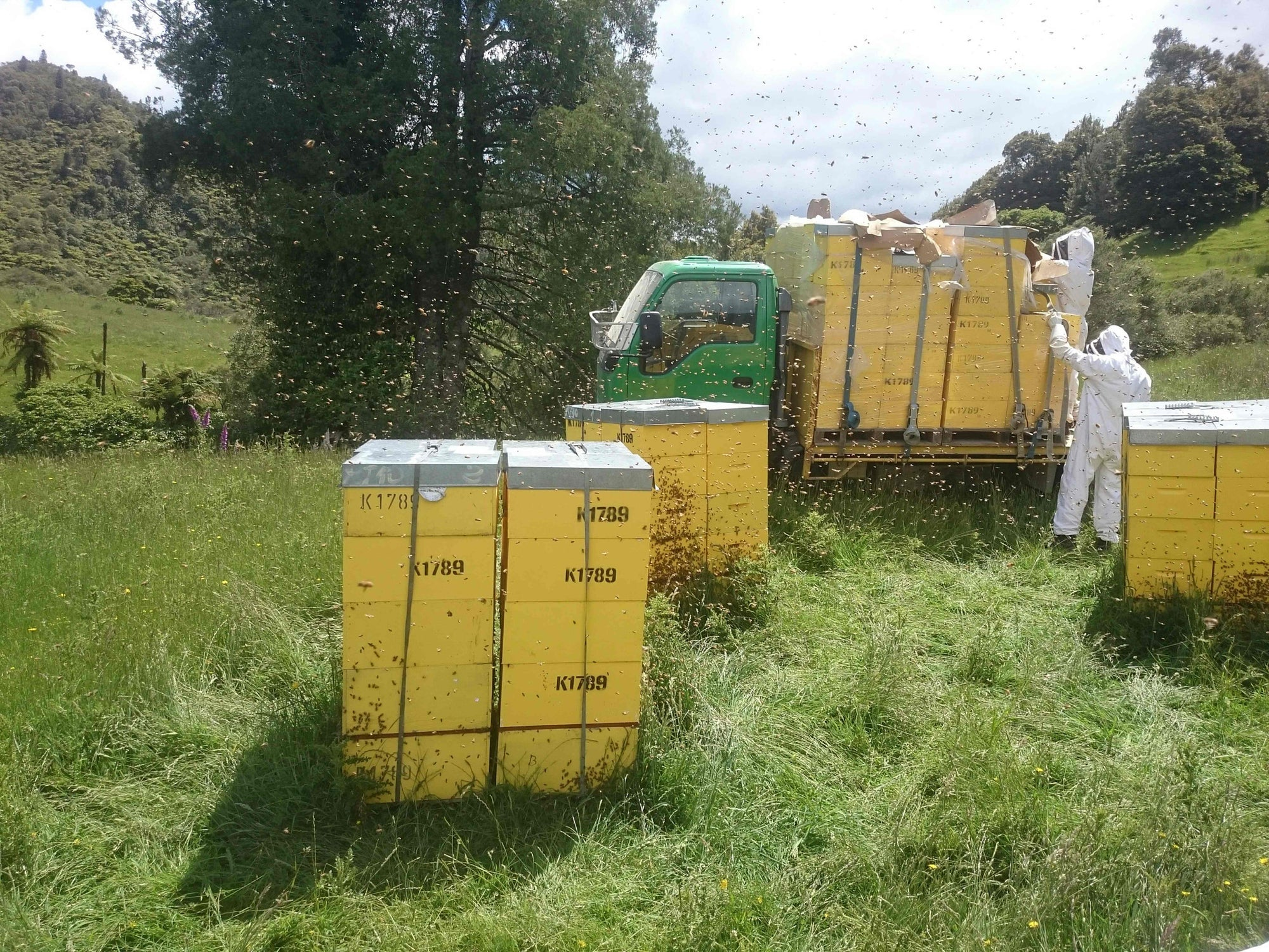 Bees & Trees Manuka bee boxes being transported