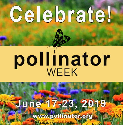 National Pollinator's Week