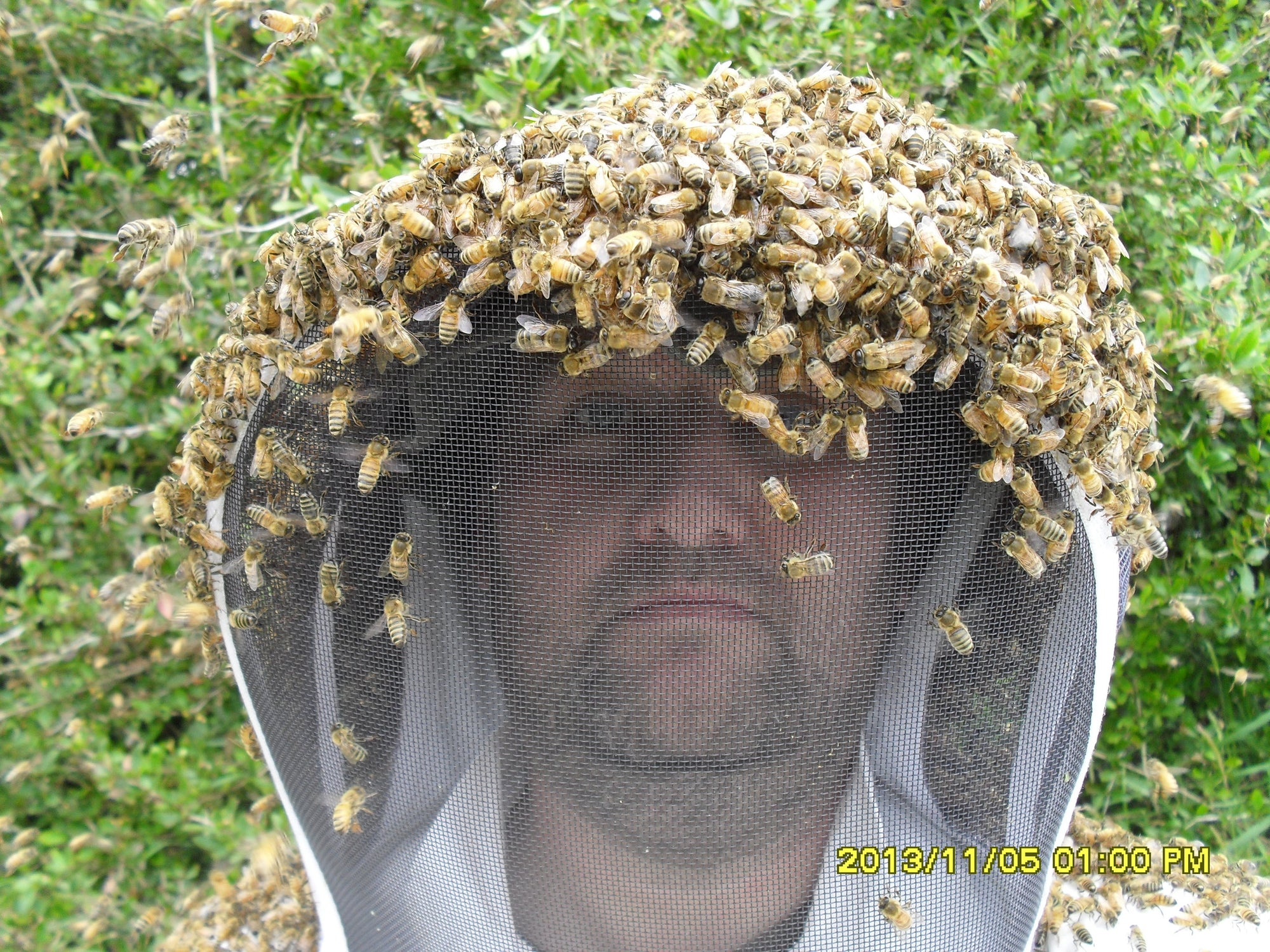 Bees Swarming on Bees & Trees Beekeeper's Head