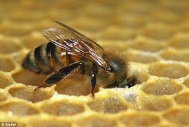 Honeybee and honeycomb, Bees & Trees Manuka honey