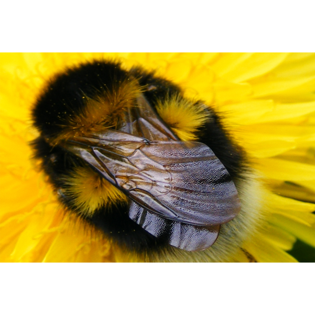 Do honeybees sleep? Of course they sleep!
