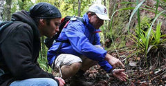 New Zealand Native Forest Restoration Trust