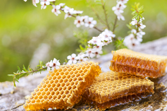 New Zealand honeycomb and manuka flowers