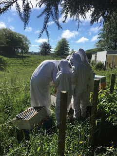 Toko School Children learning about bees
