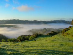 Fog in a New Zealand Valley
