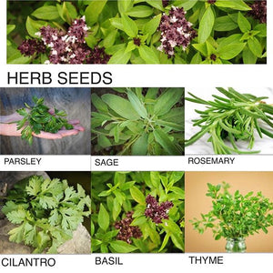 Baker Creek Herbs