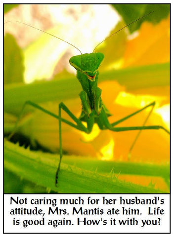 Mrs. Mantis