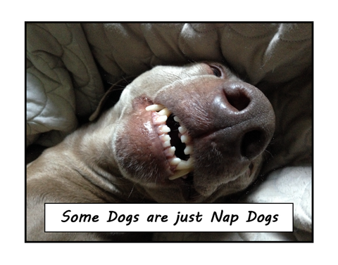 Nap Dogs