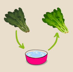 wilted lettuce, food waste reduction