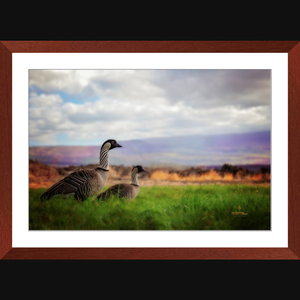 Hawaiian Nene Geese - Framed art photograph print with mat
