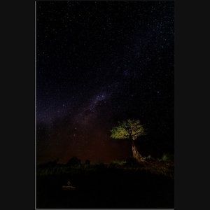 Milky Way Over African Boab Tree - art photograph on metal print wall art