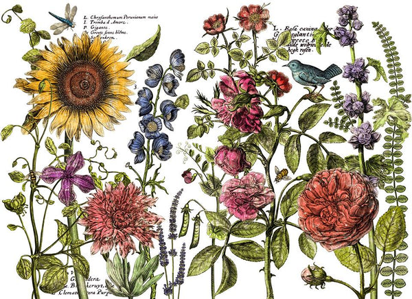 'Botanist's Journal' IOD Decor Transfer™