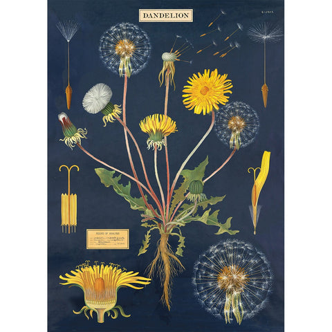 Dandelion Paper + Poster Hanging Kit PLUS TWO MORE PAPERS
