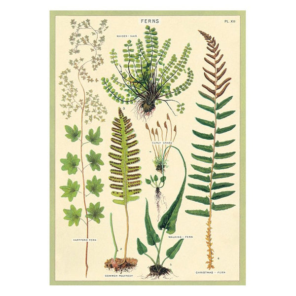 Fern Paper + Hanging Kit