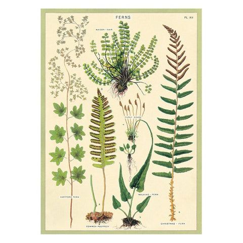Fern Paper + Poster Hanging Kit PLUS TWO MORE PAPERS