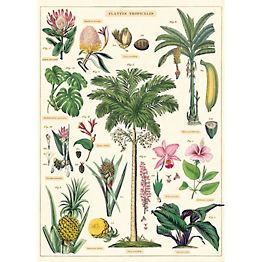Tropical Plants Paper + Poster Hanging Kit PLUS TWO MORE PAPERS