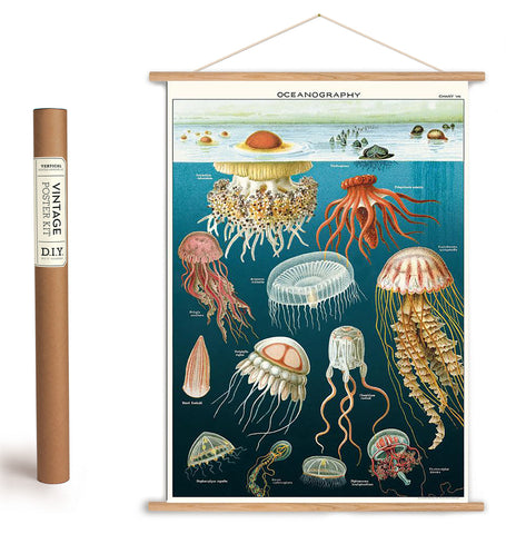 Jellyfish Oceanography + Hanging Kit