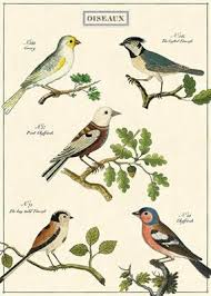 Oiseaux Paper + Poster Hanging Kit