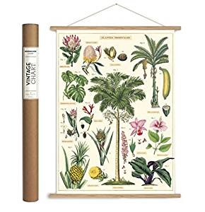Tropical Plants Paper + Hanging Kit