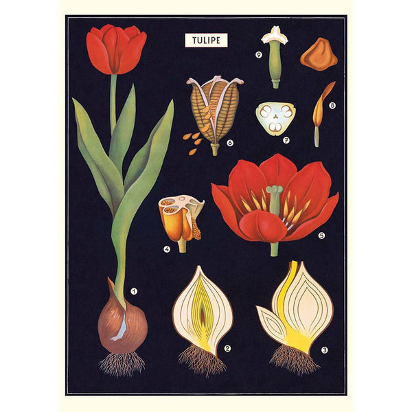 Tulip Paper + Poster Hanging Kit PLUS TWO MORE PAPERS