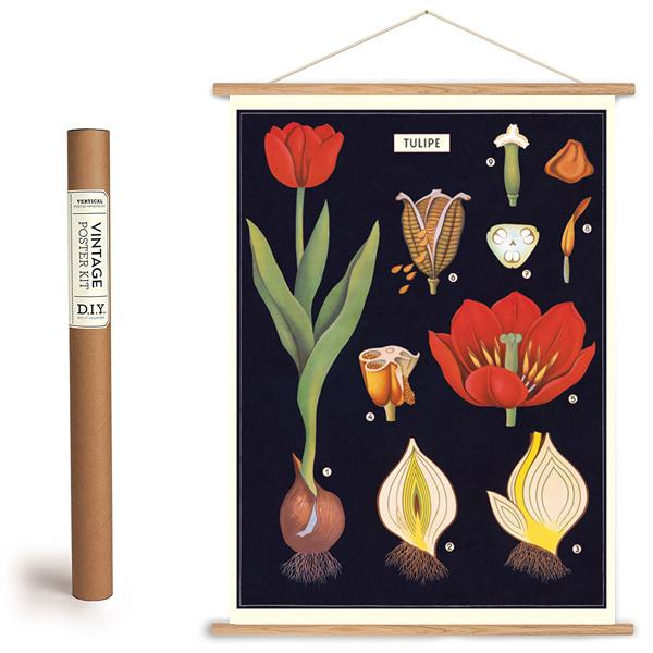 Tulip Paper + Hanging Kit