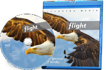 Flight: The Genius of Birds - Blu Ray