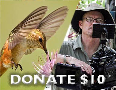 Donate to Illustra Media: $10