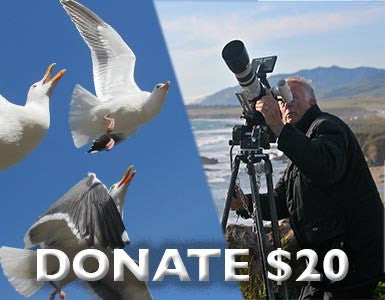 Donate to Illustra Media: $20