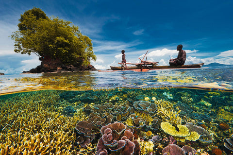 Coral Reef Photograph by David Doubilet