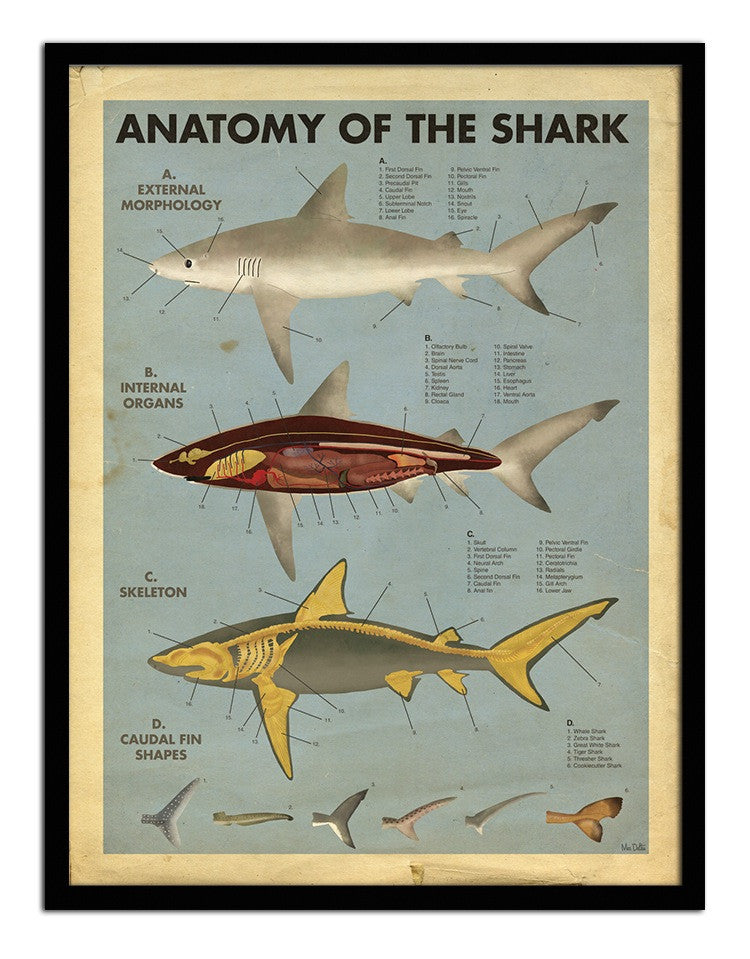 "Max Dalton, ""Anatomy of the Shark"""