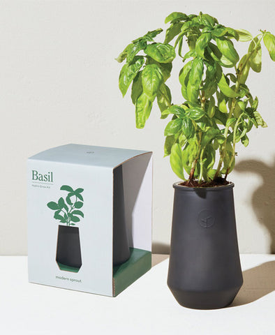 Tapered Tumbler, Basil