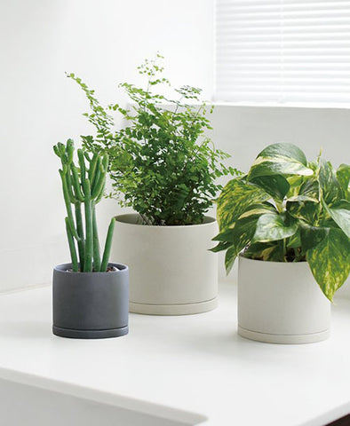Plant Pot, in Medium