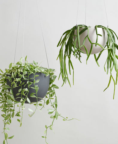 Hanging Planter, One Size