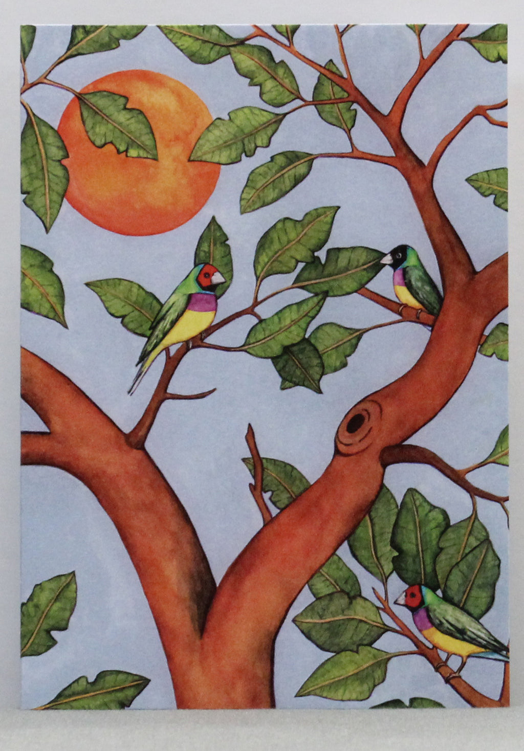 Gouldian Finch Greeting Card